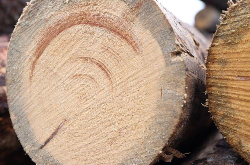 #04 Aber was ist eigentlich Käferholz?
