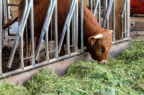 Mit geprüften Materialien sorgen wir dafür, dass sich Mensch und Tier gleichermaßen wohlfühlen können